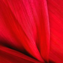 Bright Red Silk Abaca